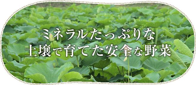 ミネラルたっぷりな土壌で育てた安全な野菜